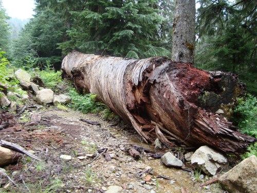Giant fallen log marking trailhead to Hardscrabble Lakes